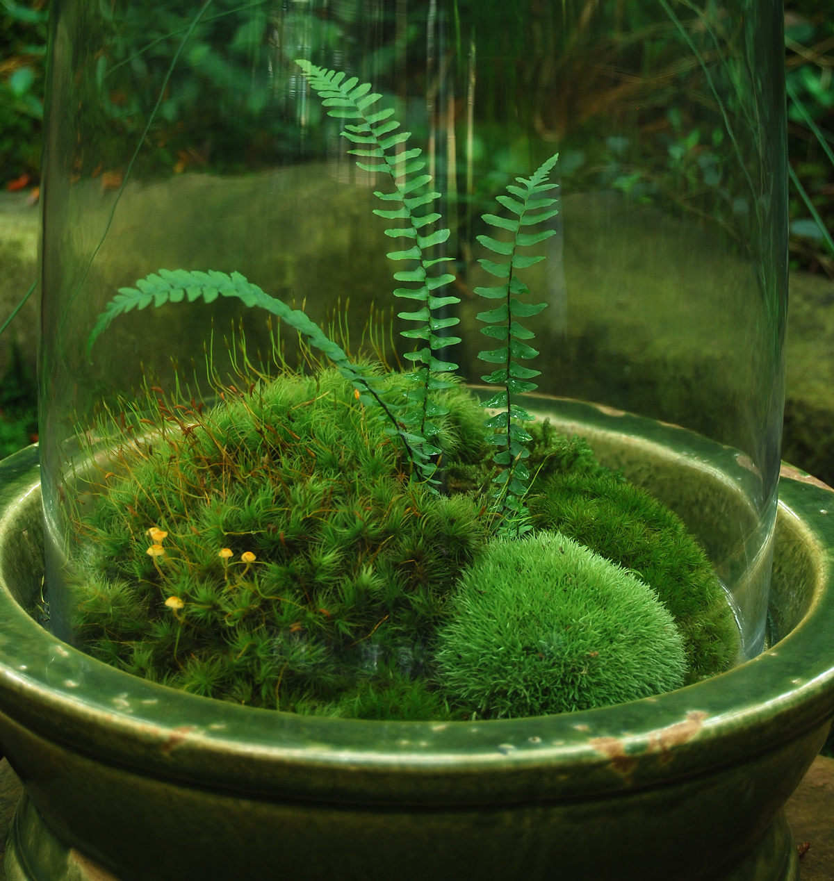 Create Your Own Moss Terrarium