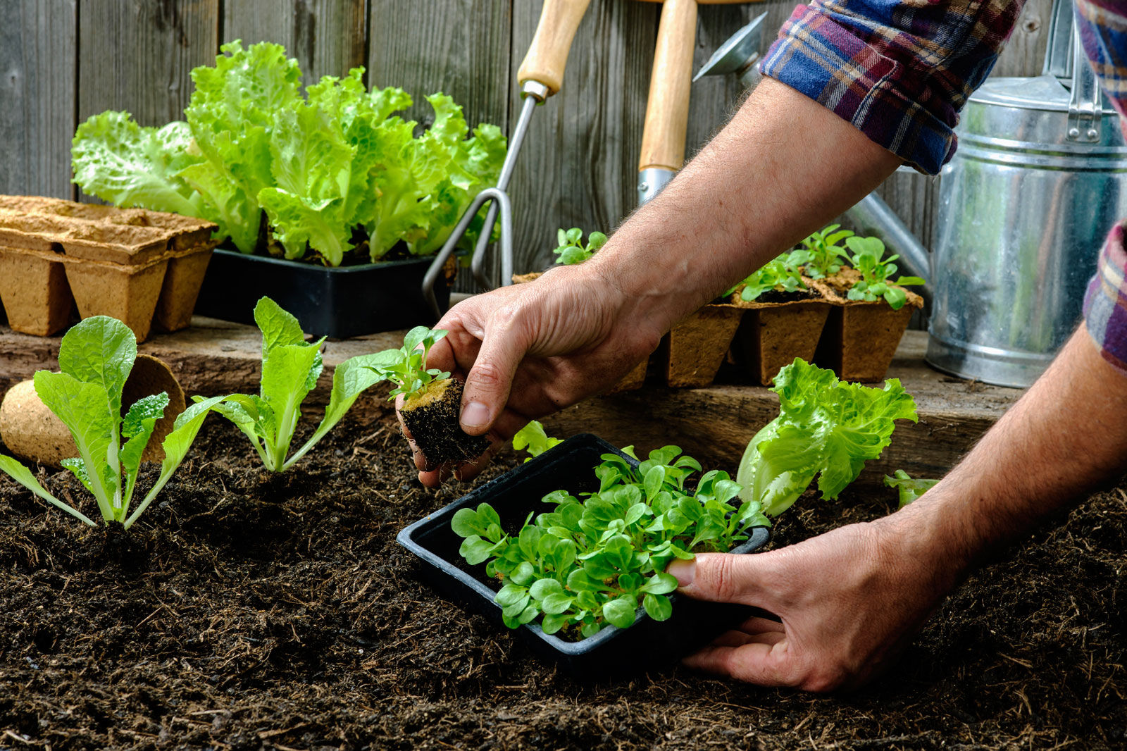 Vegetable Gardening for a Resilient Community