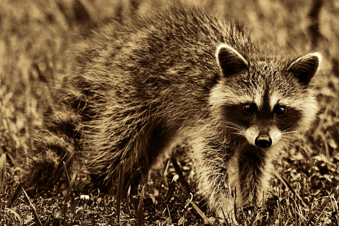 Catawba County Confirms Fifth Rabies Case of 2018