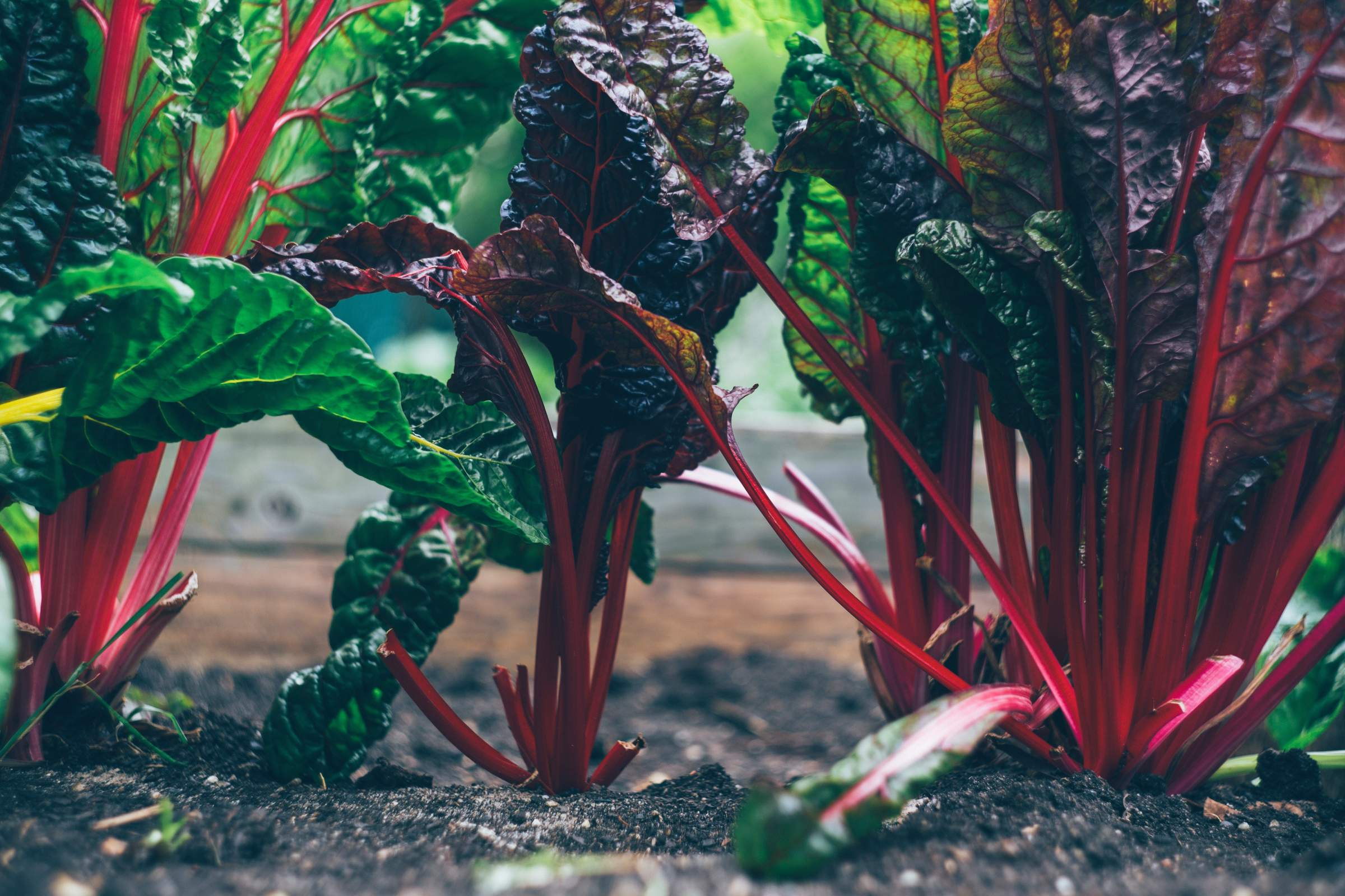 An Introduction to Organic Gardening